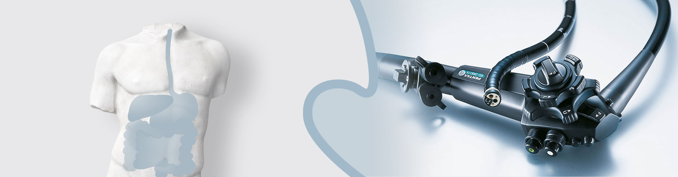Endoskop und Darstellung des Magen-Darm-Traktes am menschlichen Torso | Praxis für Gastroenterologie Dr. Rösler in Bayreuth