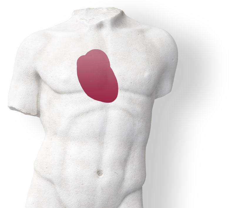 Darstellung des Herzens am menschlichen Oberkörper als Sinnbild für den Fachbereich Kardiologie der Praxis Dr. Rösler und Dr. Lachmann in Bayreuth