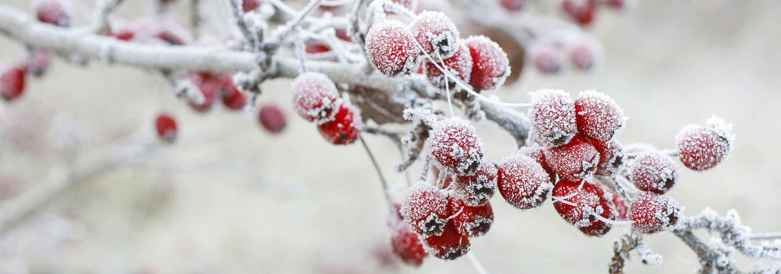 Sliderbild Winter  Arztpraxis Rösler Lachmann